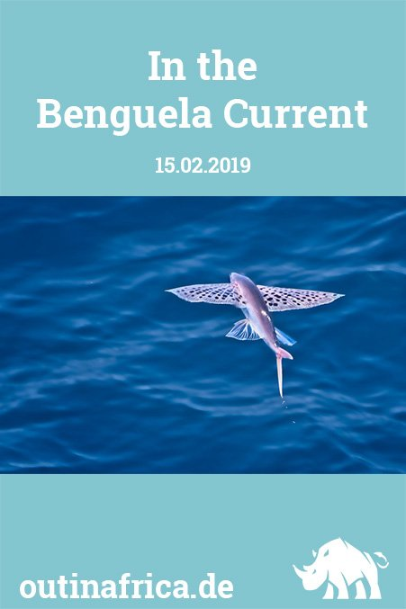 15.2.2019 – In the Benguela Current