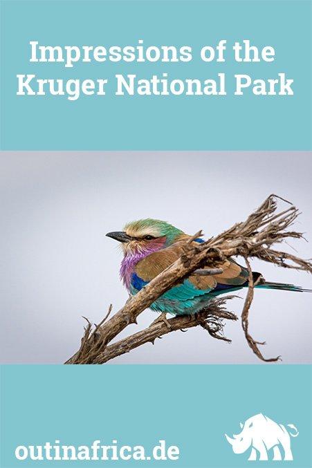 Impressions of the Kruger National Park