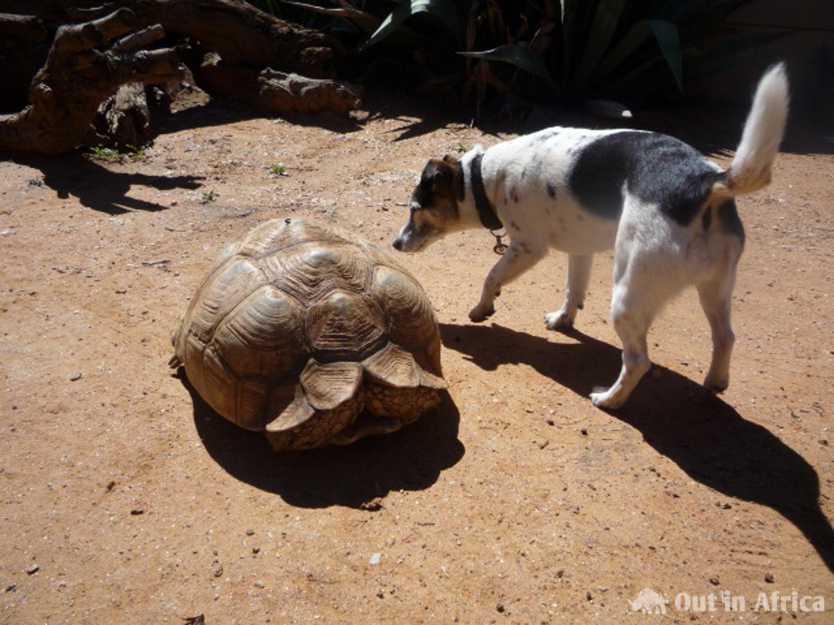 Penny and tortoise